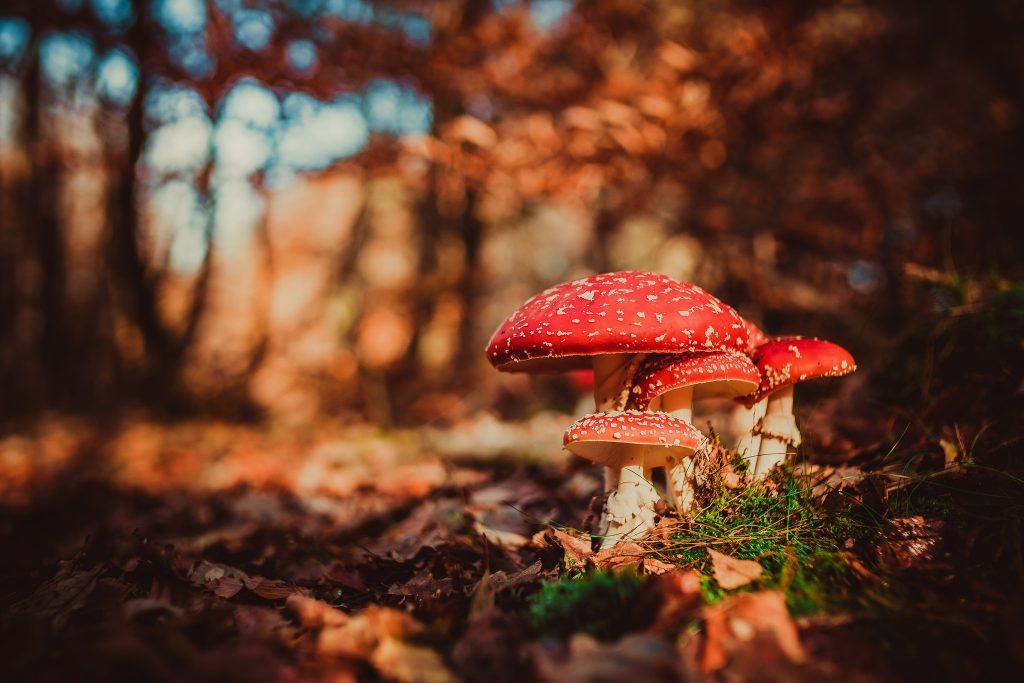 Картинки осень грибы на рабочий стол на весь экран (12)