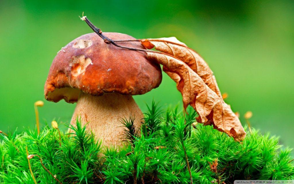 Картинки осень грибы на рабочий стол на весь экран (13)