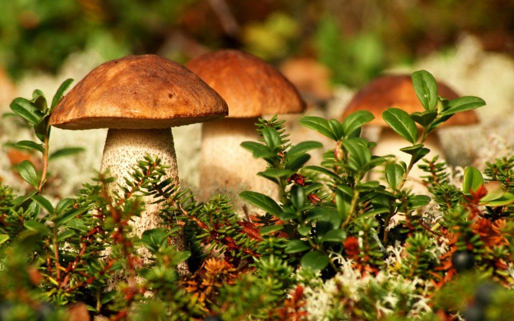 Картинки осень грибы на рабочий стол на весь экран (14)