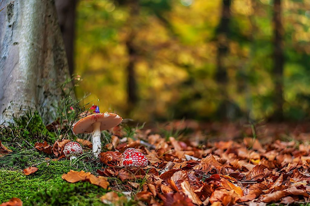 Картинки осень грибы на рабочий стол на весь экран (19)