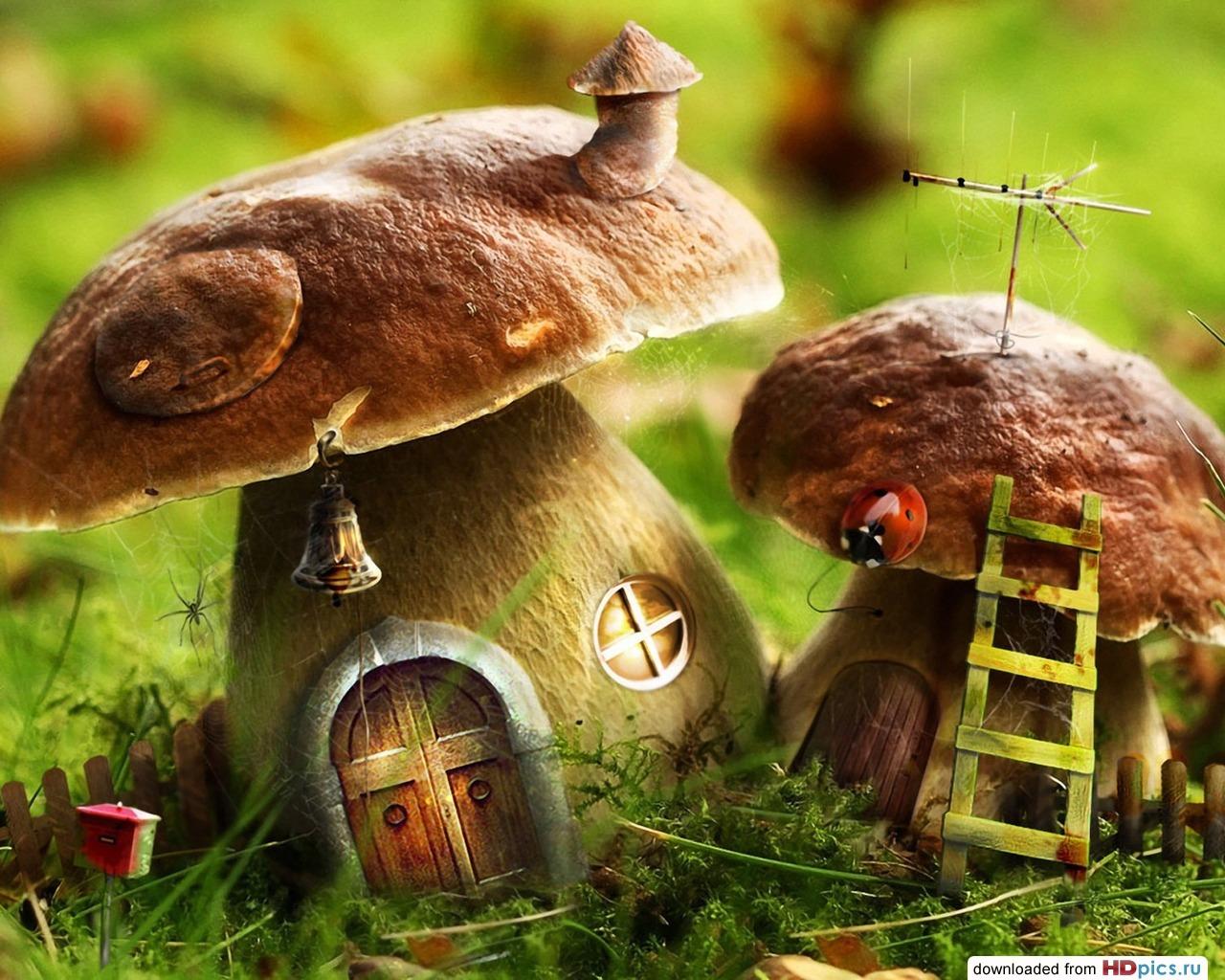 Картинки осень грибы на рабочий стол на весь экран (2)