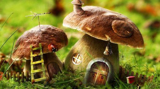 Картинки осень грибы на рабочий стол на весь экран (21)