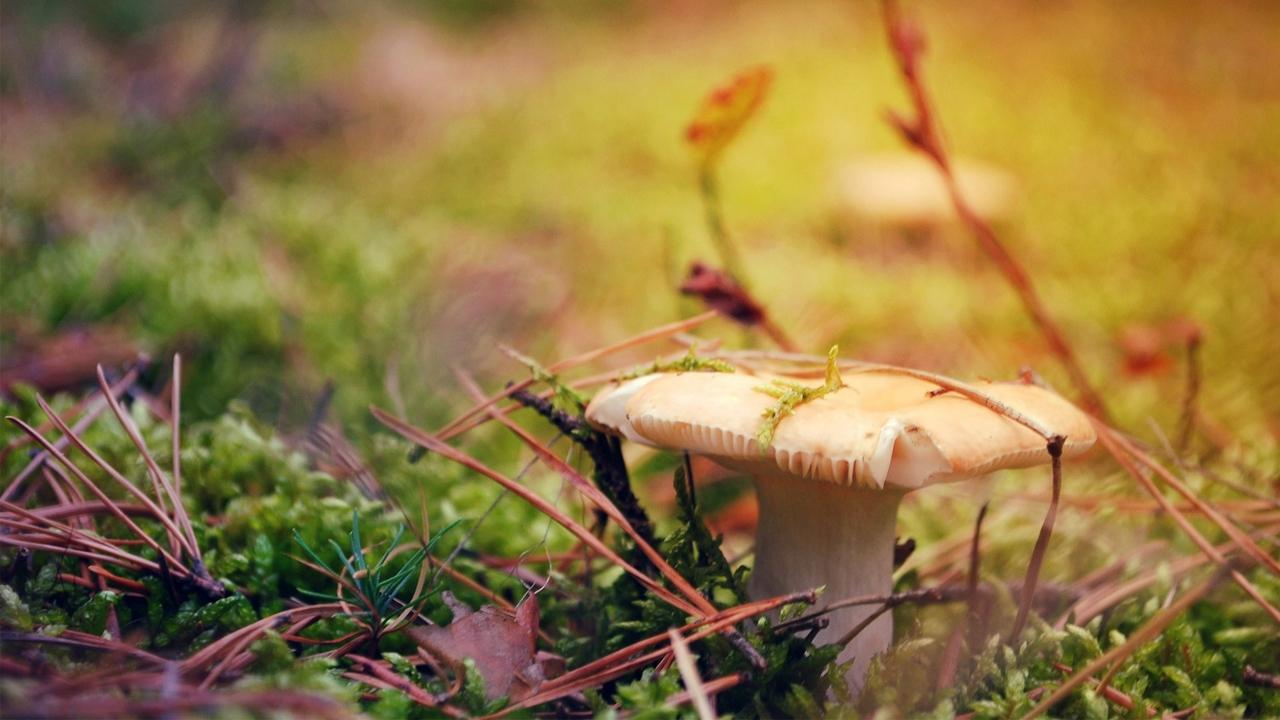 Картинки осень грибы на рабочий стол на весь экран (3)