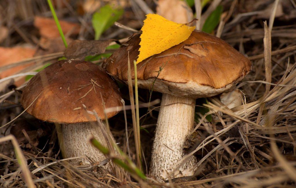 Картинки осень грибы на рабочий стол на весь экран (6)