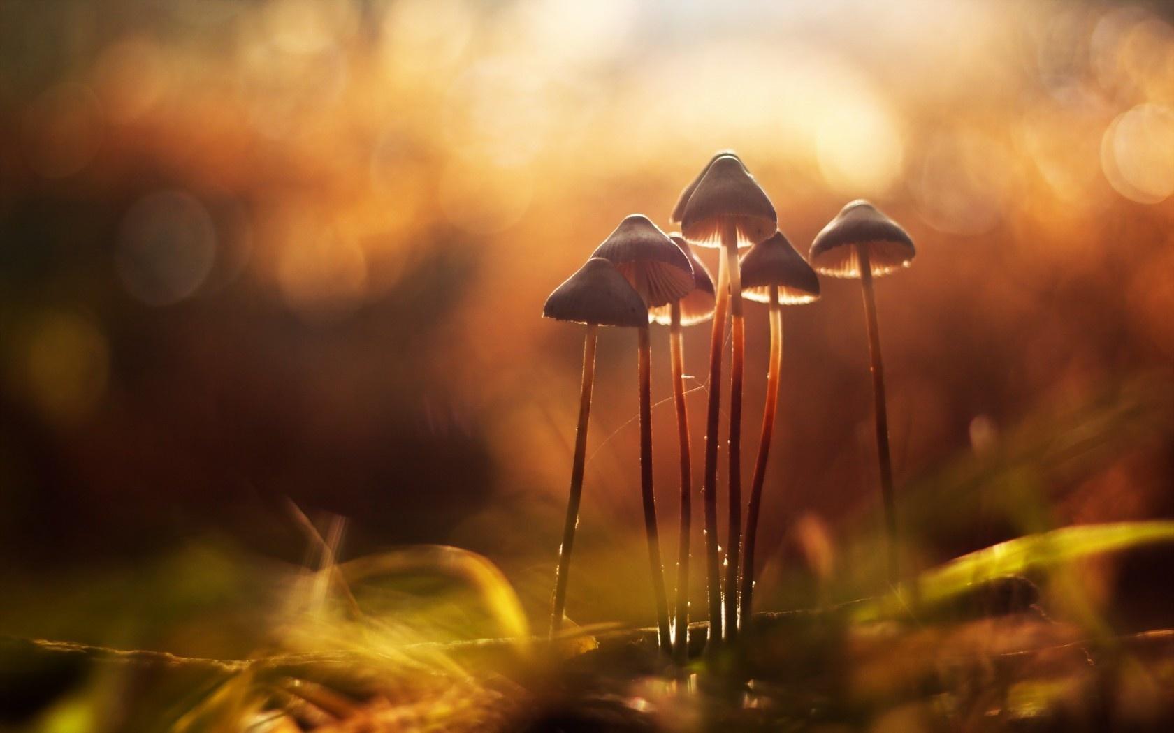 Картинки осень грибы на рабочий стол на весь экран (8)