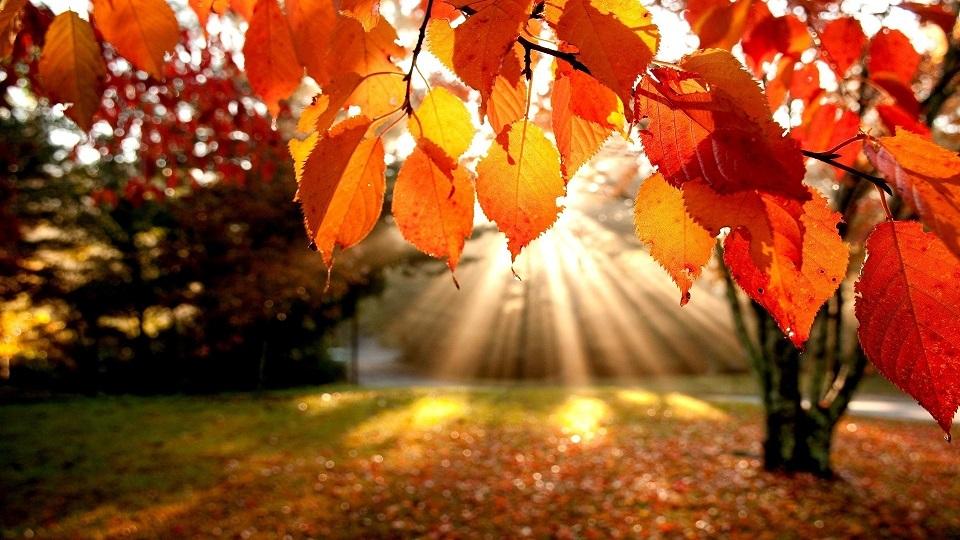 Картинки осень и любовь очень милые (10)