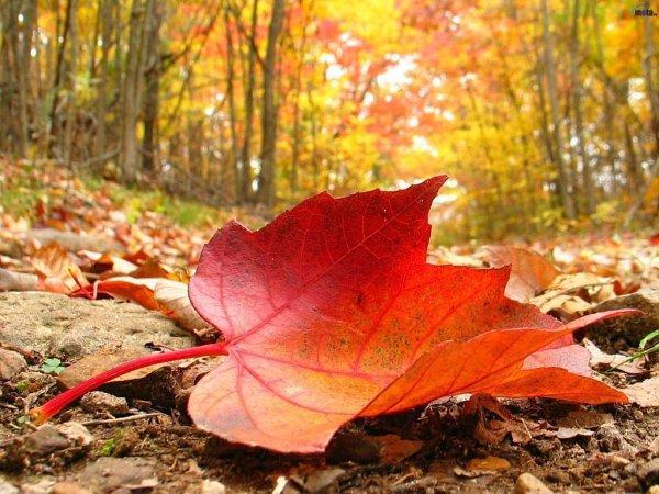 Картинки осень и любовь очень милые (6)