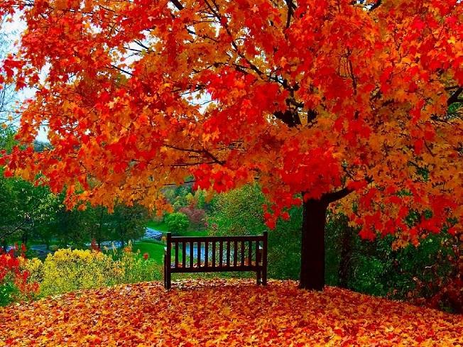 Картинки осень и любовь очень милые (9)
