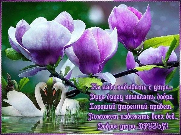Картинки привет и с добрым утром очень милые006
