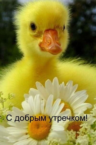 Картинки привет и с добрым утром очень милые013