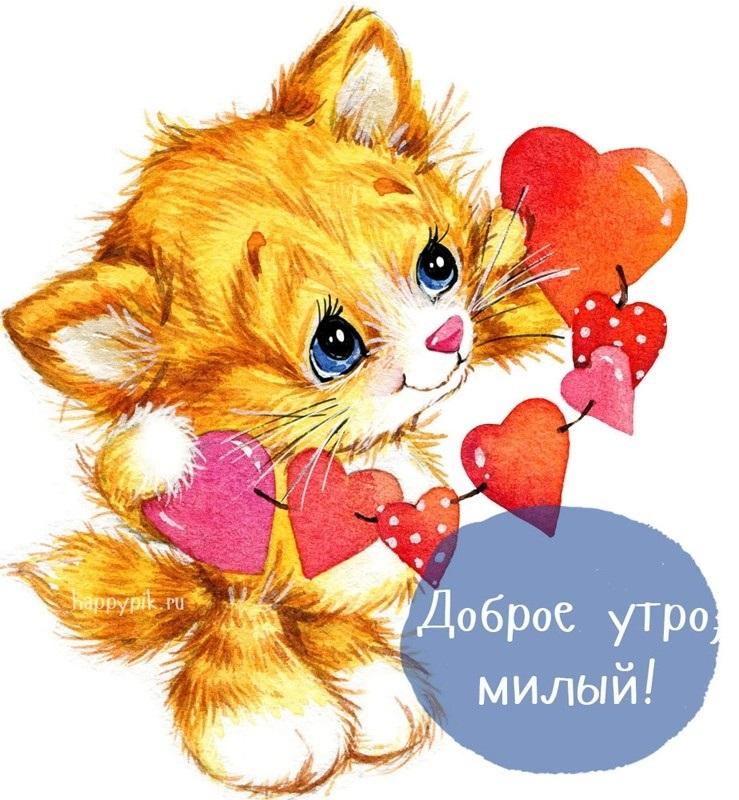 Картинки привет и с добрым утром очень милые016
