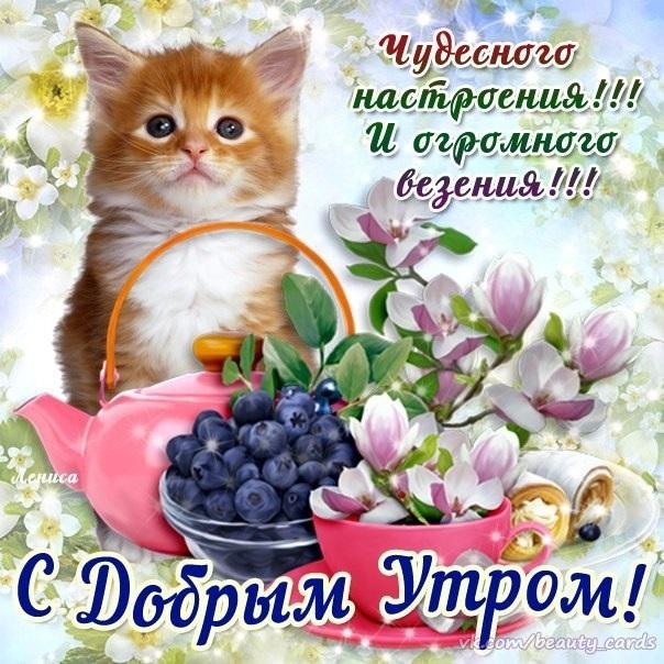 Картинки привет и с добрым утром очень милые023