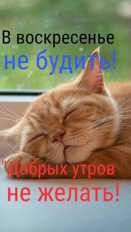 Картинки про воскресенье прикольные с юмором001