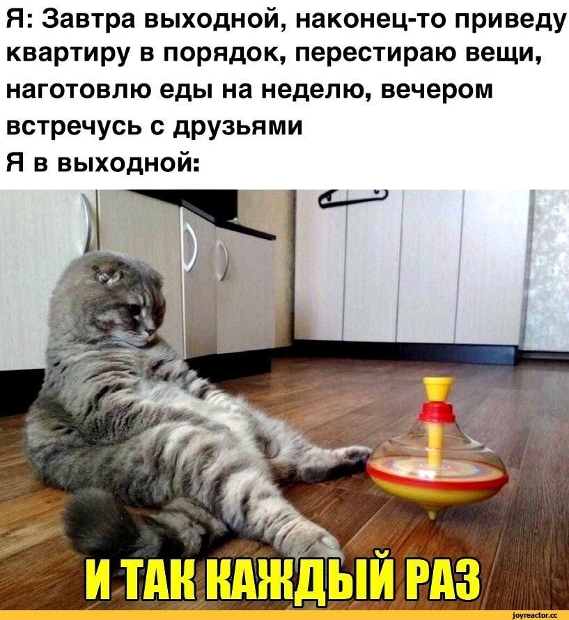 Картинки про воскресенье прикольные с юмором004