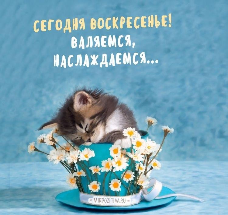 Картинки про воскресенье прикольные с юмором022