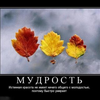 Картинки смешные до слез с надписями про осень001