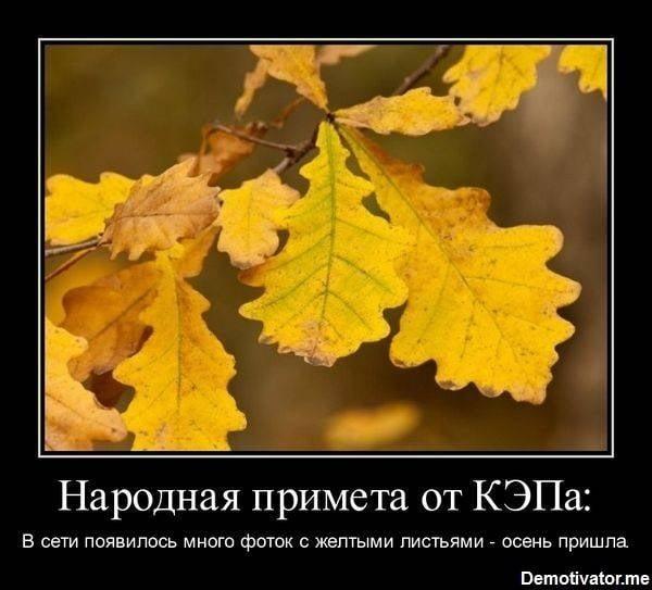 Картинки смешные до слез с надписями про осень019