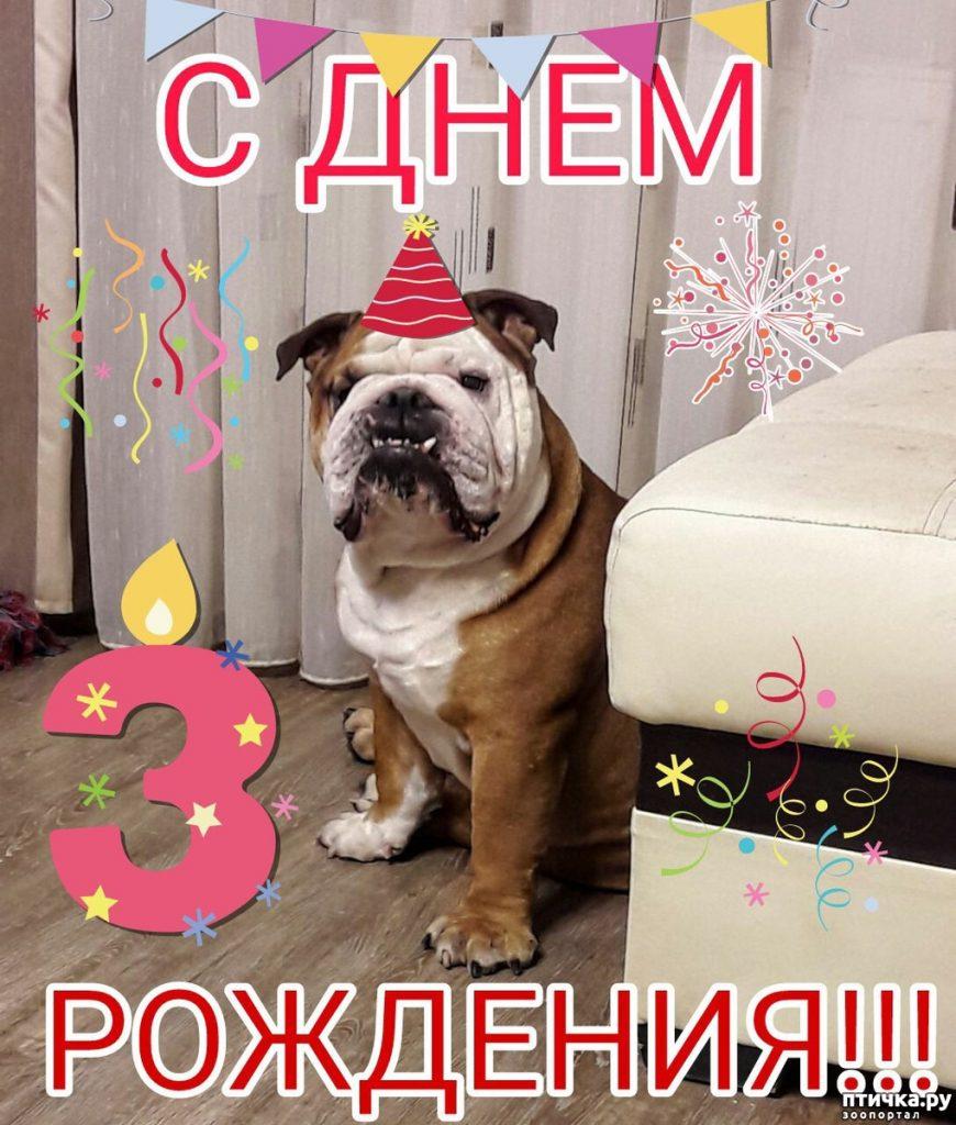 Картинки с днем рождения - фото животных (6)