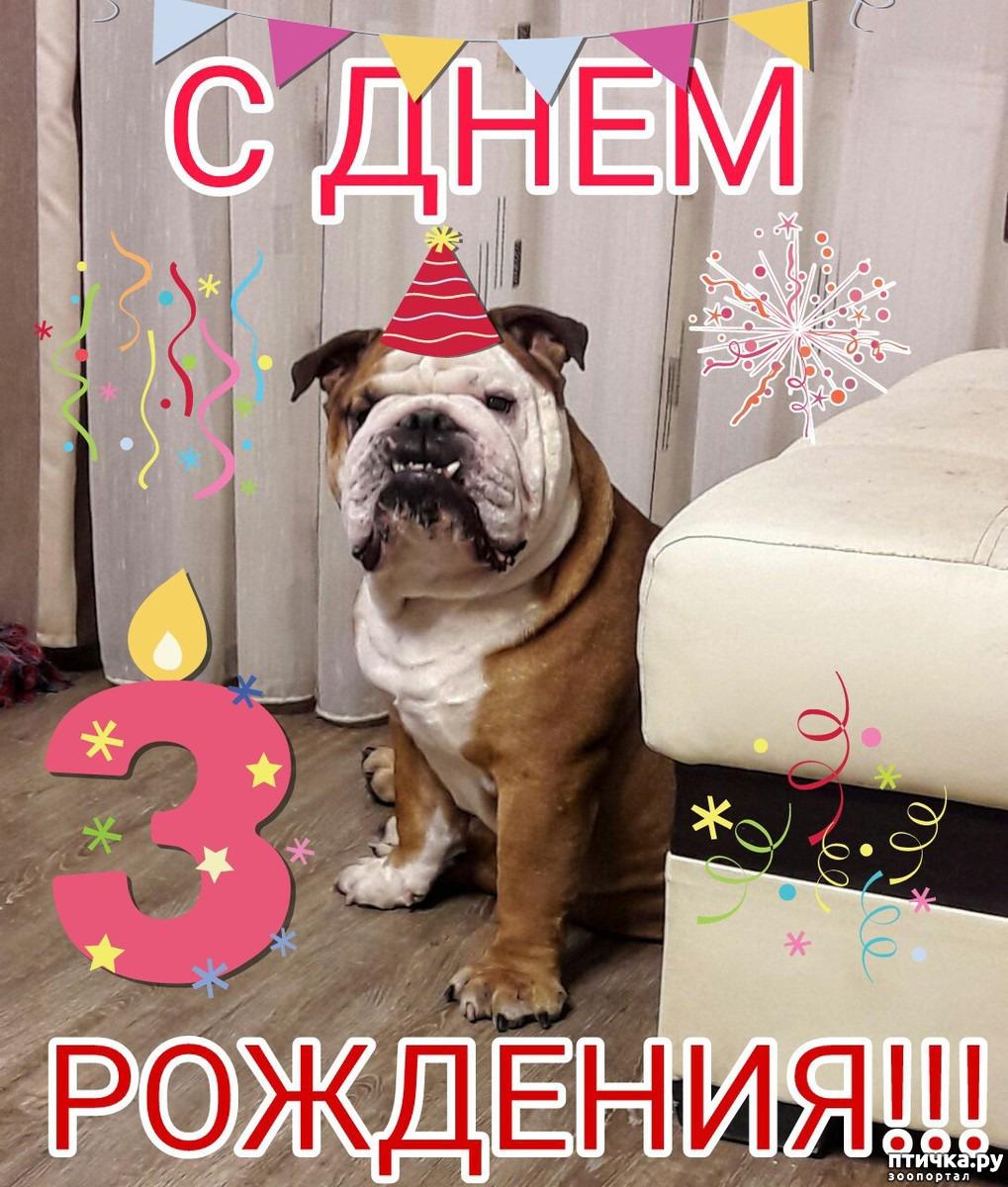Картинки с днем рождения   фото животных (6)