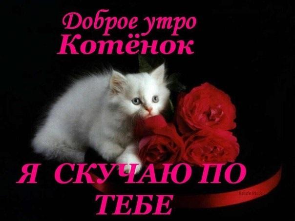 Одноклассниках, гифы нежного утра мой котенок