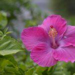 Классные картинки на рабочий стол октябрь цветы