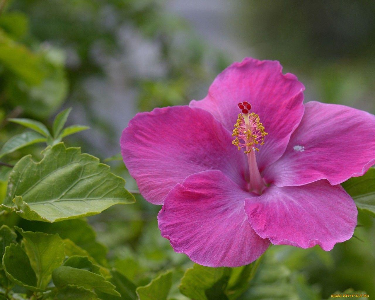 Классные картинки на рабочий стол октябрь цветы (1)