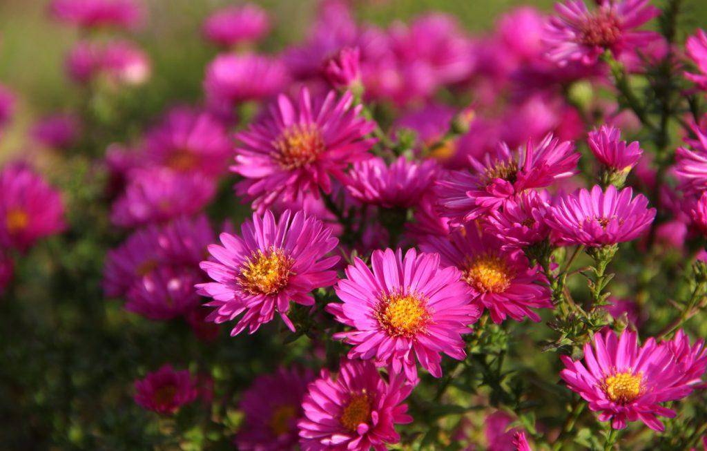 Классные картинки на рабочий стол октябрь цветы (16)