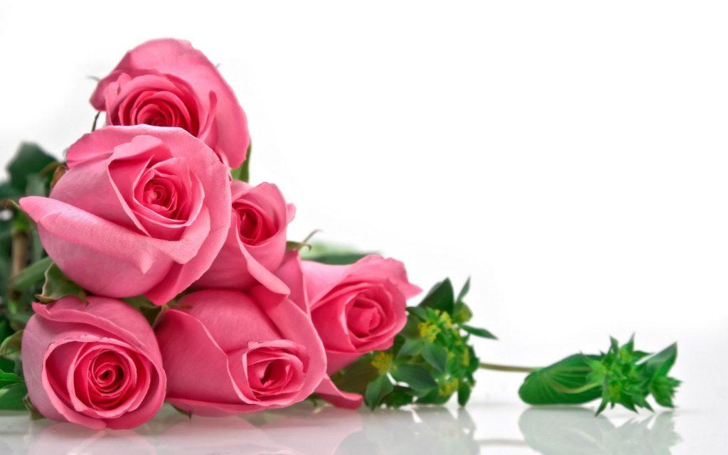 Классные картинки на рабочий стол октябрь цветы (17)