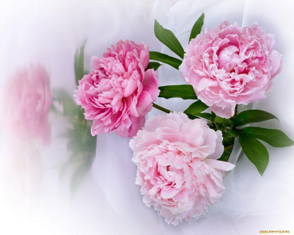 Классные картинки на рабочий стол октябрь цветы (2)