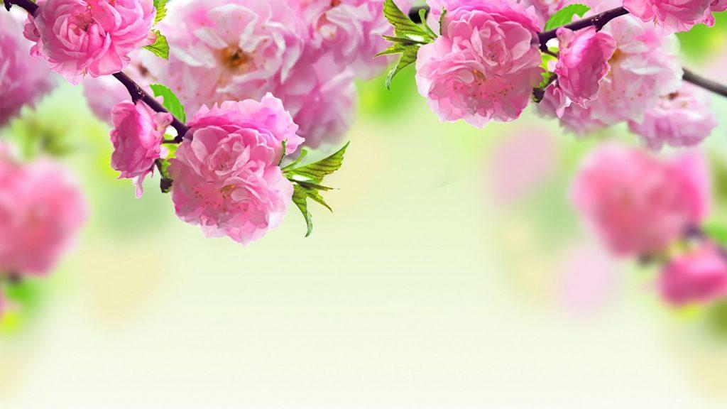 Классные картинки на рабочий стол октябрь цветы (3)
