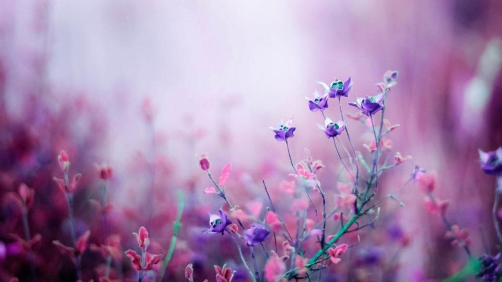 Классные картинки на рабочий стол октябрь цветы (6)