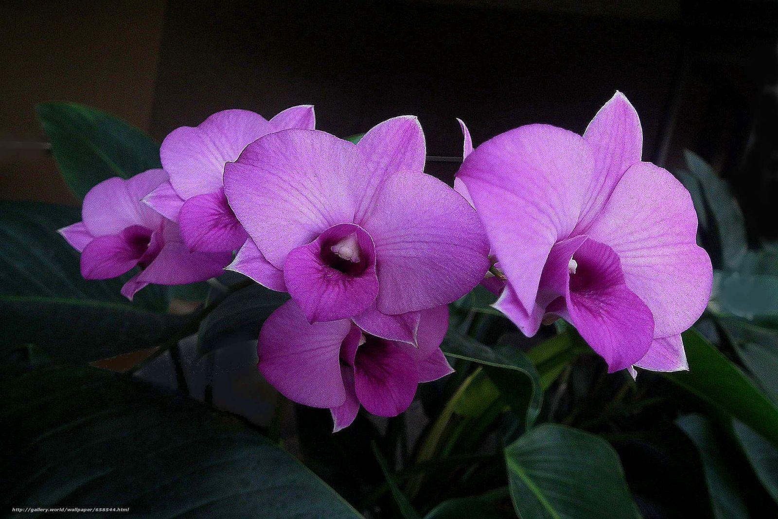 Классные картинки на рабочий стол октябрь цветы (8)