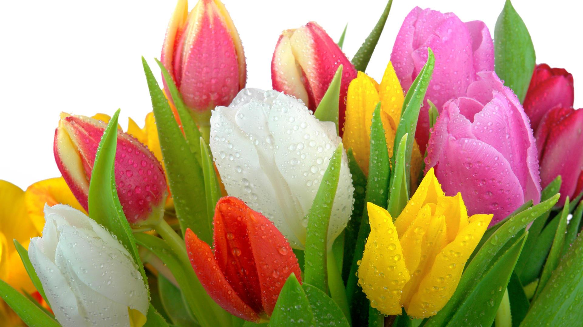 Классные картинки на рабочий стол октябрь цветы (9)