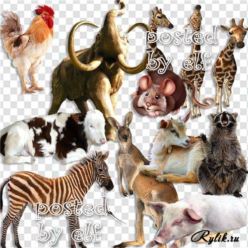 Клипарт животные для детей на прозрачном фоне - сборка (16)