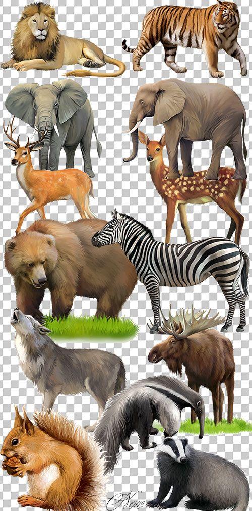 Клипарт животные для детей на прозрачном фоне - сборка (33)