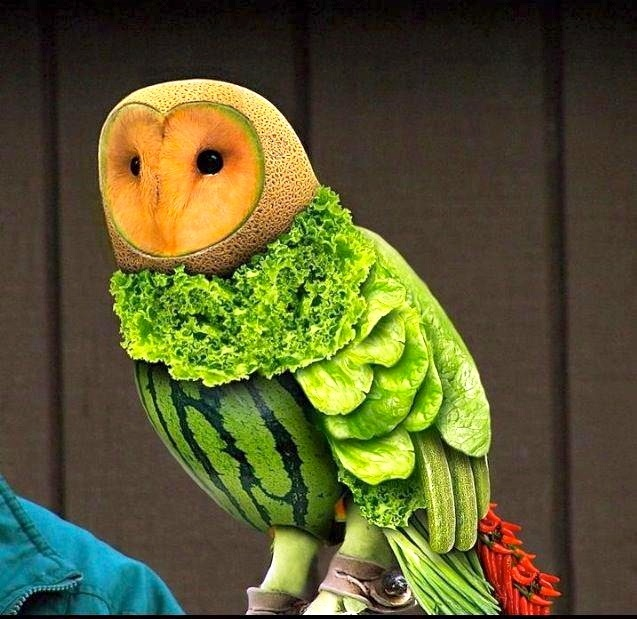 Красивая сова для поделки в картинках009