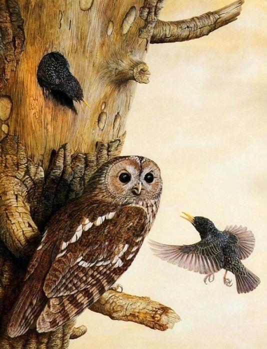 Красивая сова для поделки в картинках015