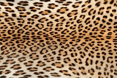 Красивые картинки леопардовый фон003
