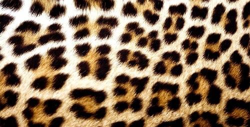 Красивые картинки леопардовый фон005