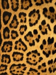 Красивые картинки леопардовый фон010