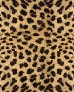 Красивые картинки леопардовый фон013