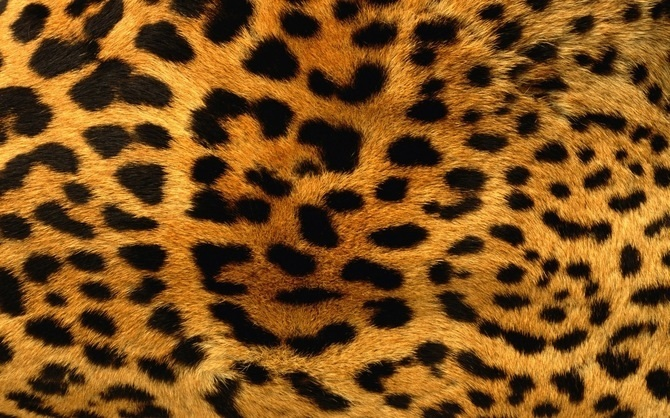 Красивые картинки леопардовый фон018