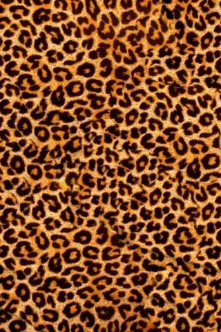 Красивые картинки леопардовый фон021