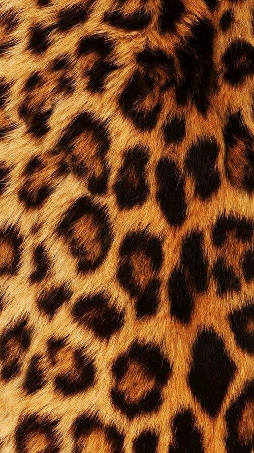 Красивые картинки леопардовый фон022