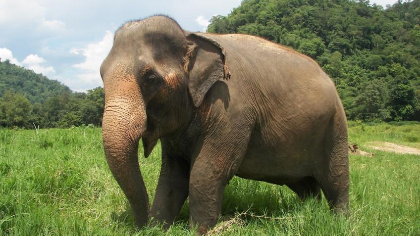 Красивые картинки на всемирный день защиты слонов (1)