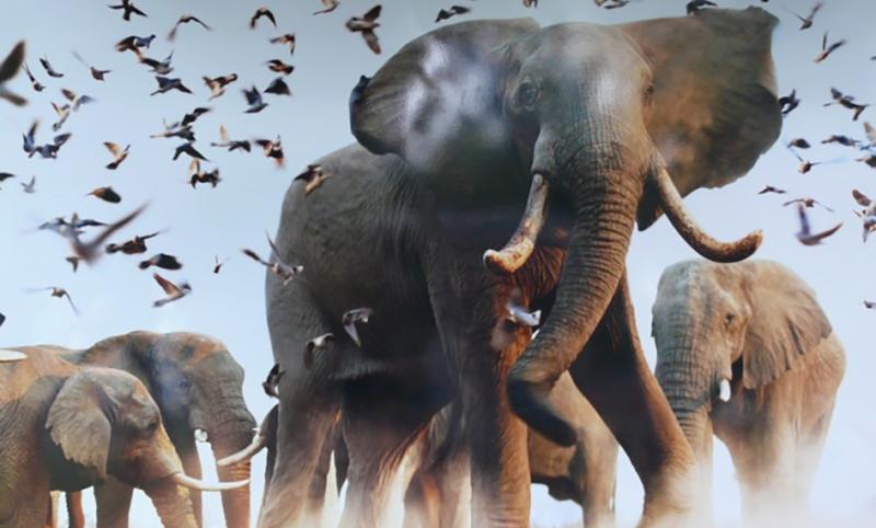 Красивые картинки на всемирный день защиты слонов (10)