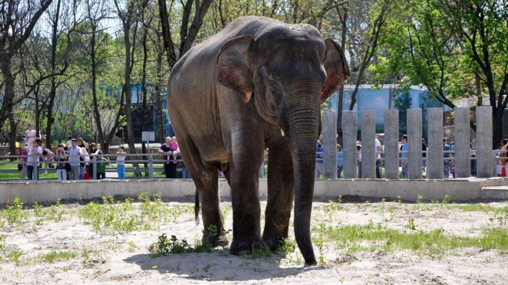 Красивые картинки на всемирный день защиты слонов (12)