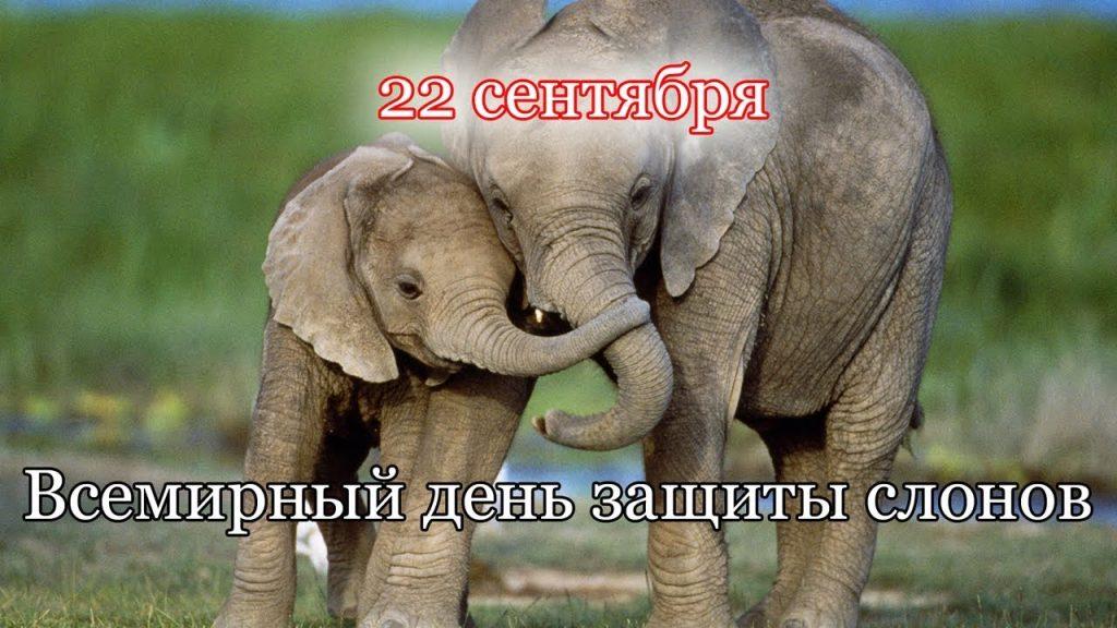 Красивые картинки на всемирный день защиты слонов (13)