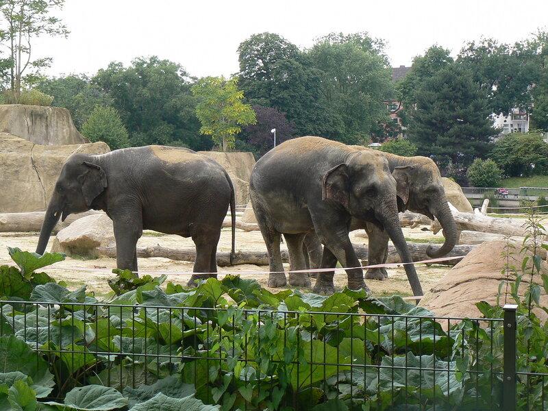 Красивые картинки на всемирный день защиты слонов (15)