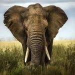Красивые картинки на всемирный день защиты слонов
